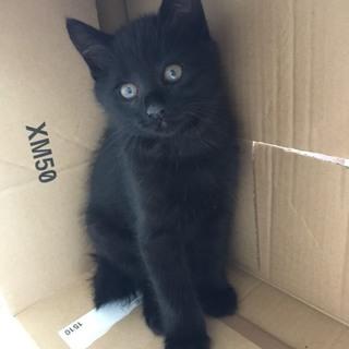 4兄妹 黒猫のポン太 2ヶ月
