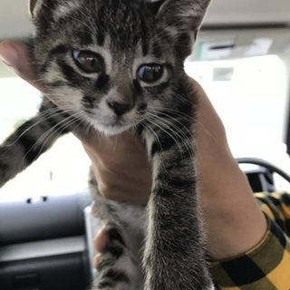 1.5ヶ月の猫ちゃん