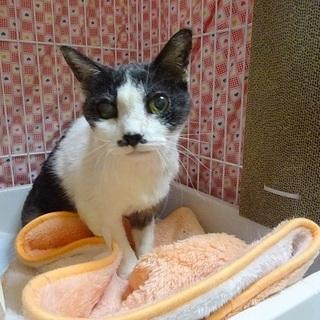 高齢のボロボロでも生きてきた猫