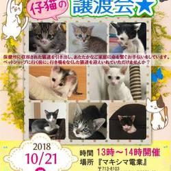 倉敷市保健所出身 子猫の譲渡会