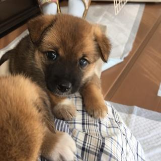 コロコロ可愛い子犬の兄弟a
