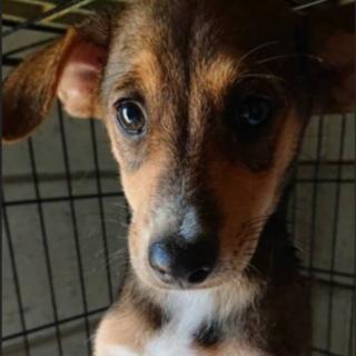 生後3か月 中型犬予想仔犬