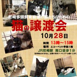 『尼崎市多頭崩壊61匹』 猫たちの緊急譲渡会 サムネイル1