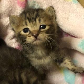 かわいい赤ちゃん子猫ちゃん