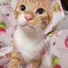 ベタ慣れ!抱っこ大好き『ライトくん』約5ヶ月 サムネイル2