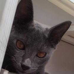 入場無料猫カフェスタイル(厳しい要求無し、避妊去勢手術費完全無料) サムネイル3