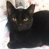 推定4ヶ月半 黒猫メス みこちゃん サムネイル2