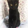 推定4ヶ月半 黒猫メス みこちゃん サムネイル4