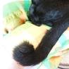 ゼンマイしっぽが可愛い男の子♪マルク4ヶ月 サムネイル2