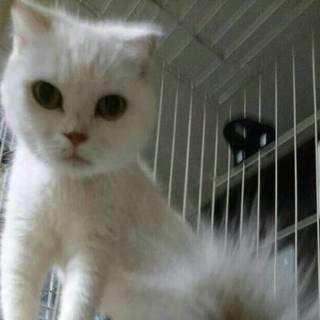 多頭飼育崩壊の猫ちゃん