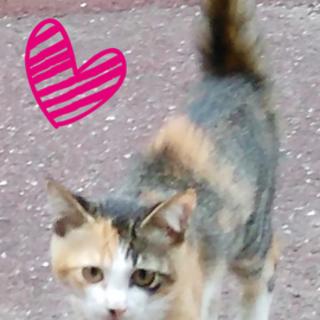 保護猫、人に慣れてる猫ちゃん。福岡県大牟田市