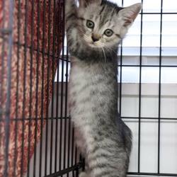 三重県津市10月21日(日)ほんわか猫な日々子猫の譲渡会