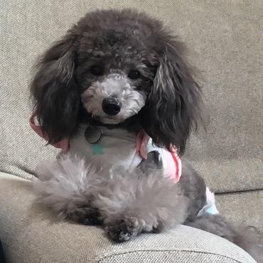 Cherie  (シェリ)の写真