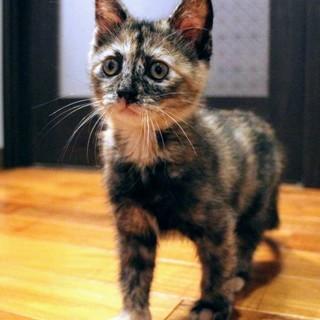 たれ目が可愛いサビ猫ちゃん