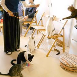 猫の幼稚園お見合い会&授業参観(ふれあいのみ希望可)