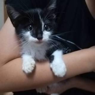 1★保護猫★生後2ヶ月、オス