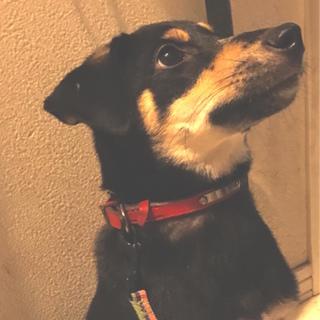 生後6ヶ月、小さめ中型犬