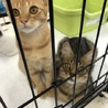 おうちねこの会「子猫成猫譲渡会」
