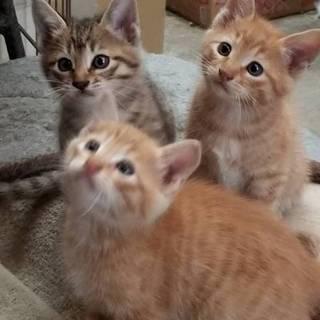 【里親募集】仔猫五匹の里親さん募集