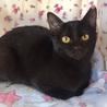 推定4ヶ月半 黒猫メス みこちゃん サムネイル3
