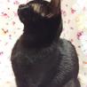 推定4ヶ月半 黒猫メス みこちゃん サムネイル5
