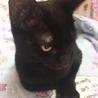 推定4ヶ月半 黒猫メス みこちゃん サムネイル6