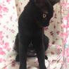 推定4ヶ月半 黒猫メス みこちゃん サムネイル7