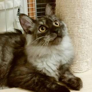 人慣れ抜群な美猫パティー&長毛のジミー
