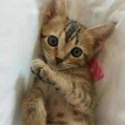 獣医大学にて猫の大譲渡会を開催いたします。是非いらしてくださいね❤️