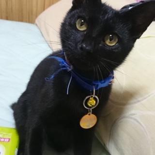 甘えん坊な黒猫