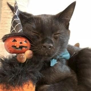 【10/21東日本橋】お鼻がキュート♡黒猫ジジくん