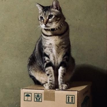 猫砂段ボールとアート猫