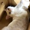 猫砂段ボールとノビ猫