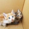 捨て猫3匹の飼い主様募集中です サムネイル2