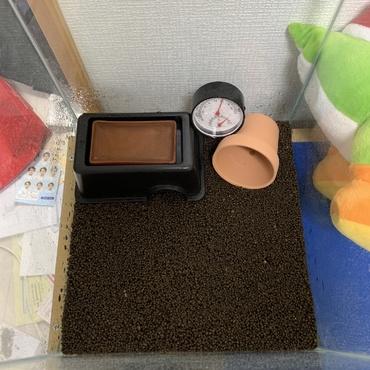 床材を赤玉からデザートソイルに変更。