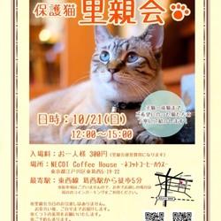 ネコ好きによる、ネコのための里親会