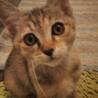 美猫ちゃんです