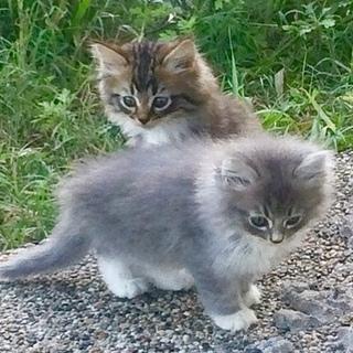愛らしい長毛の子猫たち