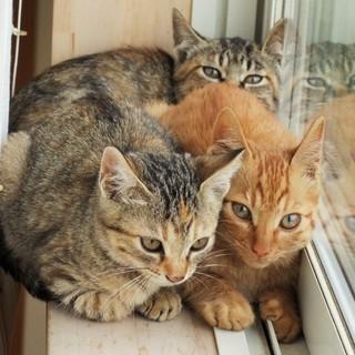 (随時更新)美形の子猫3匹!大切に育ててくれる方!