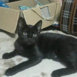 黒猫3か月可愛いいルルちゃん