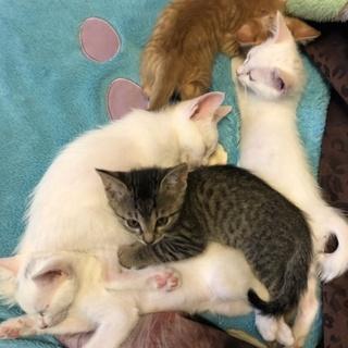 子猫1匹~4匹選んで下さい。