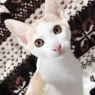 子猫貰ってください(=^・^=)