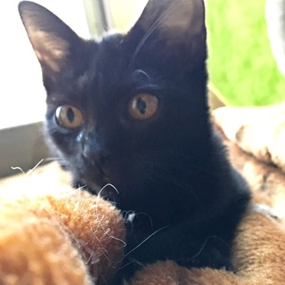 黒猫「ねぎ」ちゃん♡