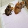 麦わら猫ちゃんの里親様募集中です サムネイル3