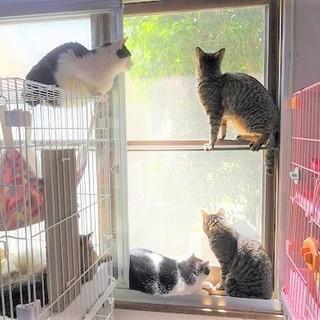 ☆大人猫を探しておられる方☆動画あり