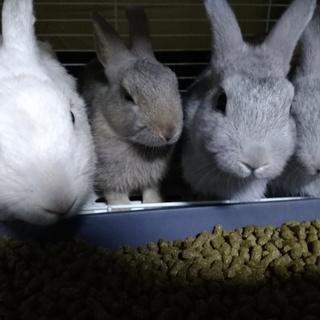 可愛い子ウサギ2匹