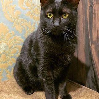 【炭治郎くん】なでなで大好きな黒猫の男の子