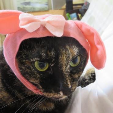 私もキティラーの仲間入り?ピンクには自信がないわぁ・・・・・