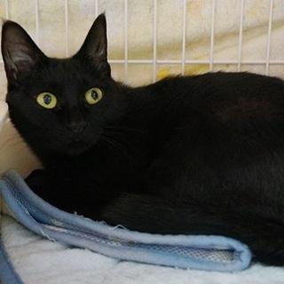 1匹飼いを希望の黒猫ちゃん