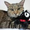 先住猫と保護した子猫の仲がよくなりません。